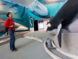 Visit of the cetacean research center